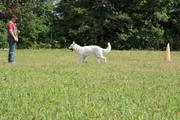berger blanc suisse